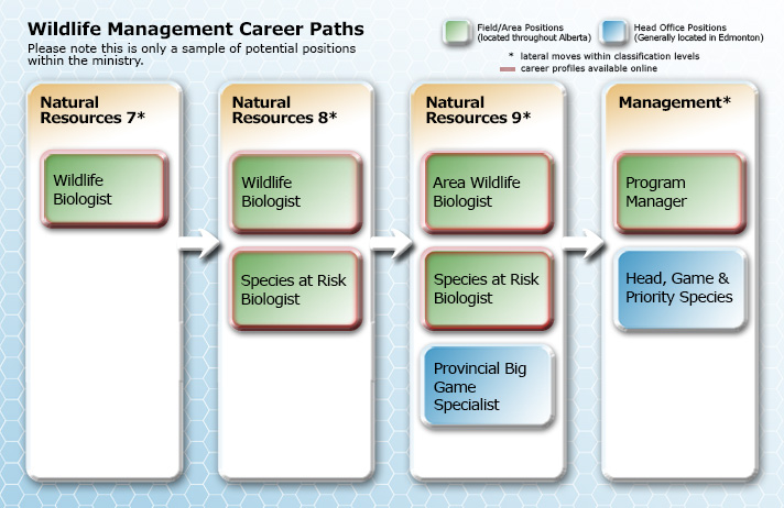 Wildlife Management Career Path