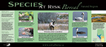 Front of Species at Risk Boreal poster