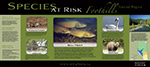 Front of Species at Risk Foothills poster