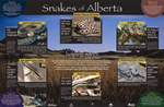 Snakes of Alberta poster