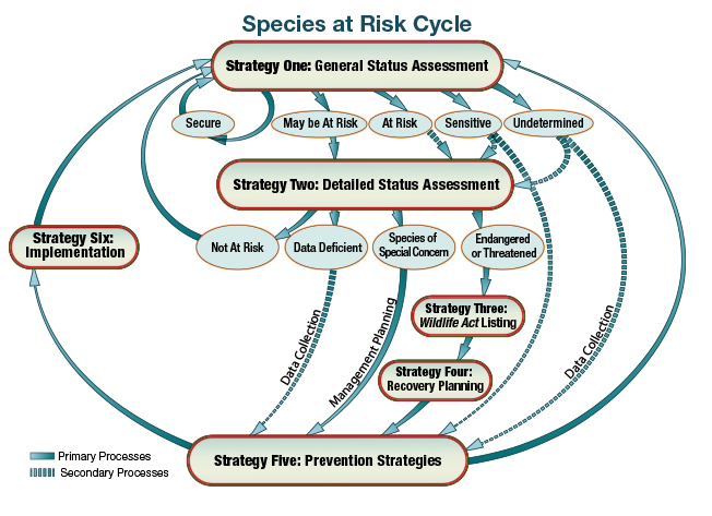 Species at Risk Cycle, illustration of cycle showing six strategies for determining species at risk in Alberta