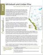 Page of Whitebark and Limber Pine Species at Risk Guide