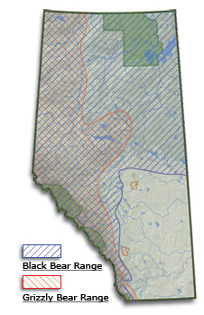 Map of Alberta showing grizzly bears inhabiting the west, black bears inhabiting the north east and no bears in the south