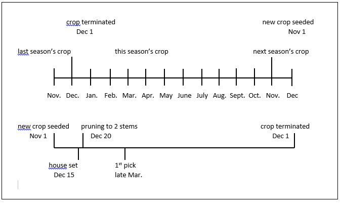 Chart showing the sweet bell pepper production cycle