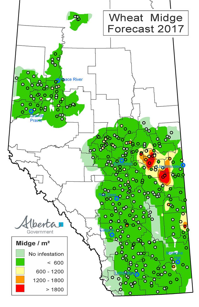 Historical Wheat Midge population maps   Alberta ca
