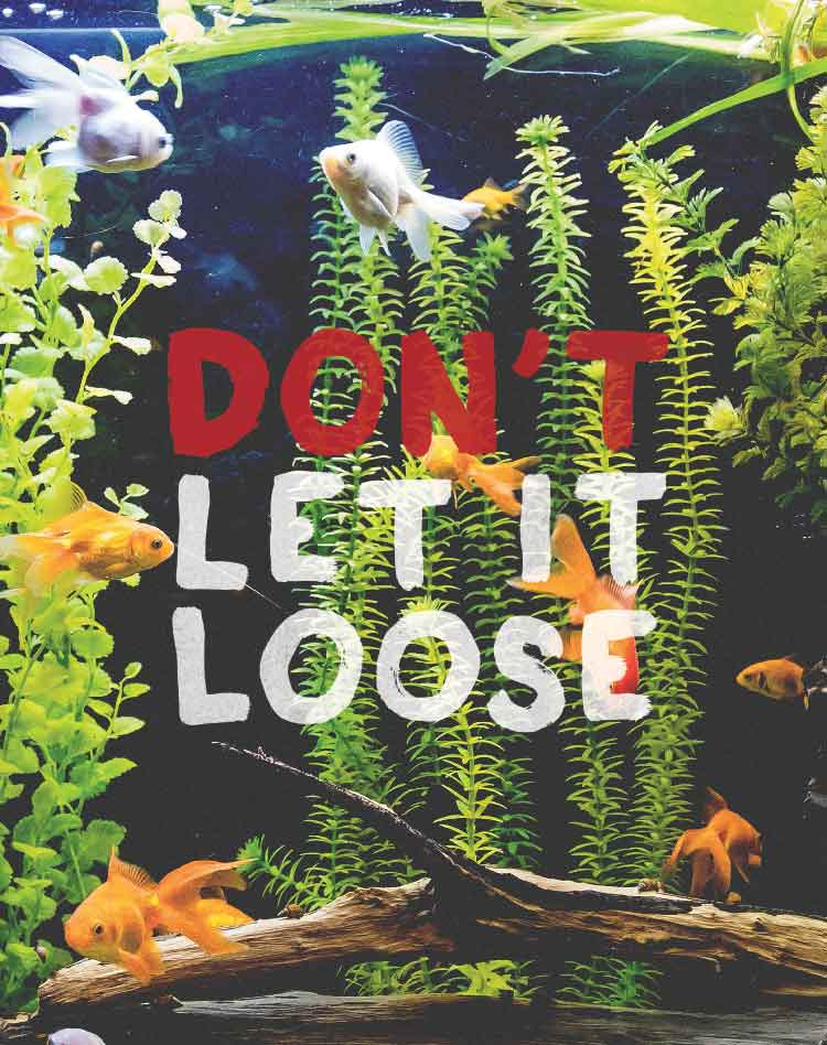 Thumbnail: Don't Let It Loost poster: Common aquarium and pond plants and animals