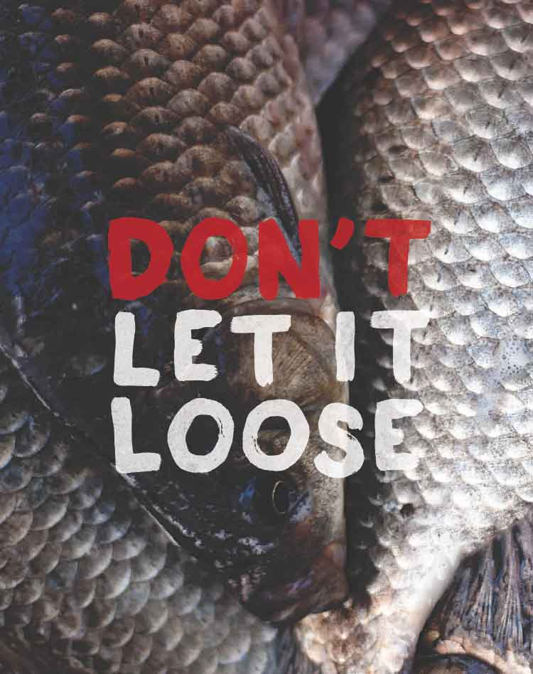 Thumbnail: Don't Let It Loose poster - Live food